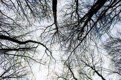 Темное, черное, пугающее дерево в лесе на предпосылке неба Стоковое фото RF