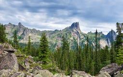Темное coniferous taiga в Сибире Стоковые Изображения RF