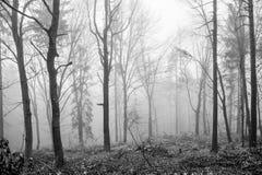 темное forrest Стоковые Фото