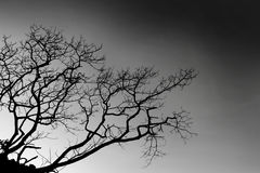 Темнота дерева дня хеллоуина Стоковые Фотографии RF