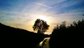Темнота дерева Стоковое Изображение RF
