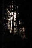 Темнота леса Стоковая Фотография RF
