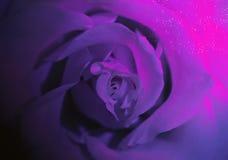 Темнота подняла с туманным заревом Стоковая Фотография RF