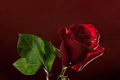 темнота предпосылки - красный цвет поднял Стоковое Фото