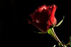 темнота предпосылки - красный цвет поднял Стоковое Изображение RF