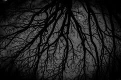 темнота halloween предпосылки Стоковые Фото