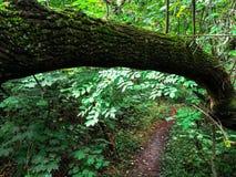 Темно-зеленая древесина стоковая фотография rf