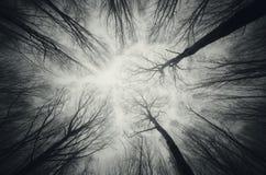 Темные деревья достигая вверх Стоковое Изображение