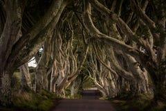 Темные изгороди, Северная Ирландия стоковое изображение rf