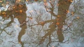 Темные изгороди Стоковая Фотография