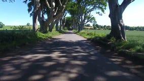 Темные изгороди Armoy антрим Северная Ирландия сток-видео