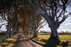 Темные изгороди, Северная Ирландия Стоковое Фото