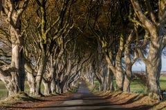 Темные изгороди, Северная Ирландия Стоковые Изображения RF