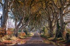 Темные изгороди, Северная Ирландия Стоковые Фотографии RF