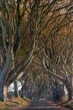 Темные изгороди, Северная Ирландия Стоковые Изображения