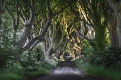 Темные изгороди, N. Ирландия Стоковые Фото