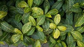 Темные и салатовые листья завода Стоковая Фотография RF