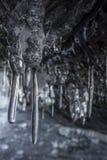 Темные и страшные ветви сосулек в пещере Несколько острых сосулек вися от потолка пещеры Стоковое Фото