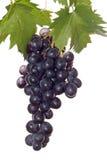 темные листья виноградины Стоковые Изображения