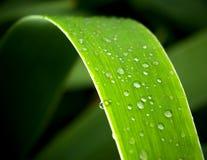 темные листья Стоковая Фотография