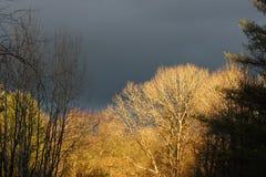 темные небеса Стоковое фото RF