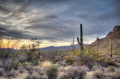 Темные облака над заходом солнца пустыни с saguaro стоковые фото