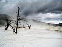 Темные облака над мертвыми деревьями в Йеллоустоне Стоковое фото RF