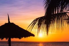 Темные силуэты пальм кокоса и зонтика пляжа стоковое изображение