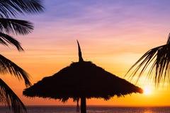 Темные силуэты пальм кокоса и зонтика пляжа стоковая фотография