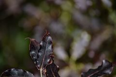 Темные сияющие листья Bokeh Стоковые Фото
