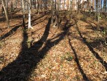 Темные тени в лесе стоковая фотография