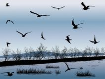 Темные чайки над берегом моря стоковое фото