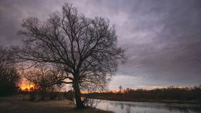 Темные черные силуэты деревьев без листьев на предпосылке красивого живого предыдущего неба восхода солнца весны Природа акции видеоматериалы