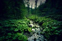 Темные ые-зелен лес и река Стоковая Фотография RF