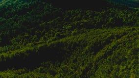 Темные ые-зелен деревья Стоковое Изображение RF