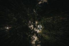 Темный бамбуковый лес снизу стоковые фотографии rf