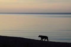темный берег моря собаки Стоковые Изображения RF