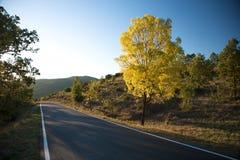 Темный вал желтого цвета дороги Стоковое фото RF