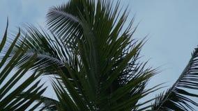 Темный взмах листьев ладони в ветре сток-видео