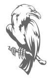 темный ворон Стоковые Фото