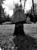 Темный деревянный гриб Стоковые Изображения RF