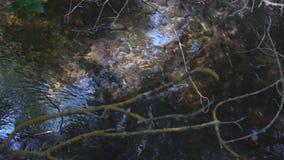 Темный лес в глубинах листвы и гора текут видеоматериал