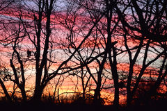 Темный лес против пламенистых облаков захода солнца Стоковые Изображения RF