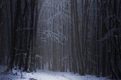 Темный лес с снегом в зиме Стоковые Изображения