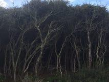 Темный лес стоковые фото