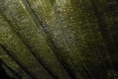 Темный желтый цвет Стоковые Изображения