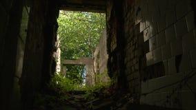 Темный коридор достигшего возраста покинутого дома перерастанного с засорителями и деревьями акции видеоматериалы