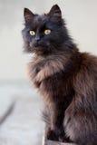 Темный кот Стоковые Фотографии RF