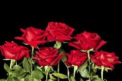 Темный - красная роза с крупным планом падений дождя стоковые изображения
