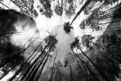 Темный лес и призрачная тень твари Стоковое Изображение RF